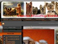 Pui de Shih Tzu si Yorkshire Terrier din canisa proprie - www.minidog.ro